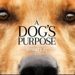 Собачья жизнь. Экранизация бестселлера Брюса Кэмерона
