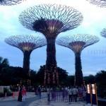 Сады у залива в Сингапуре — современное чудо света