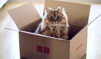 Переезд кот, Переезд - зло, как лучше перевозить вещи при переезде, кот в коробке