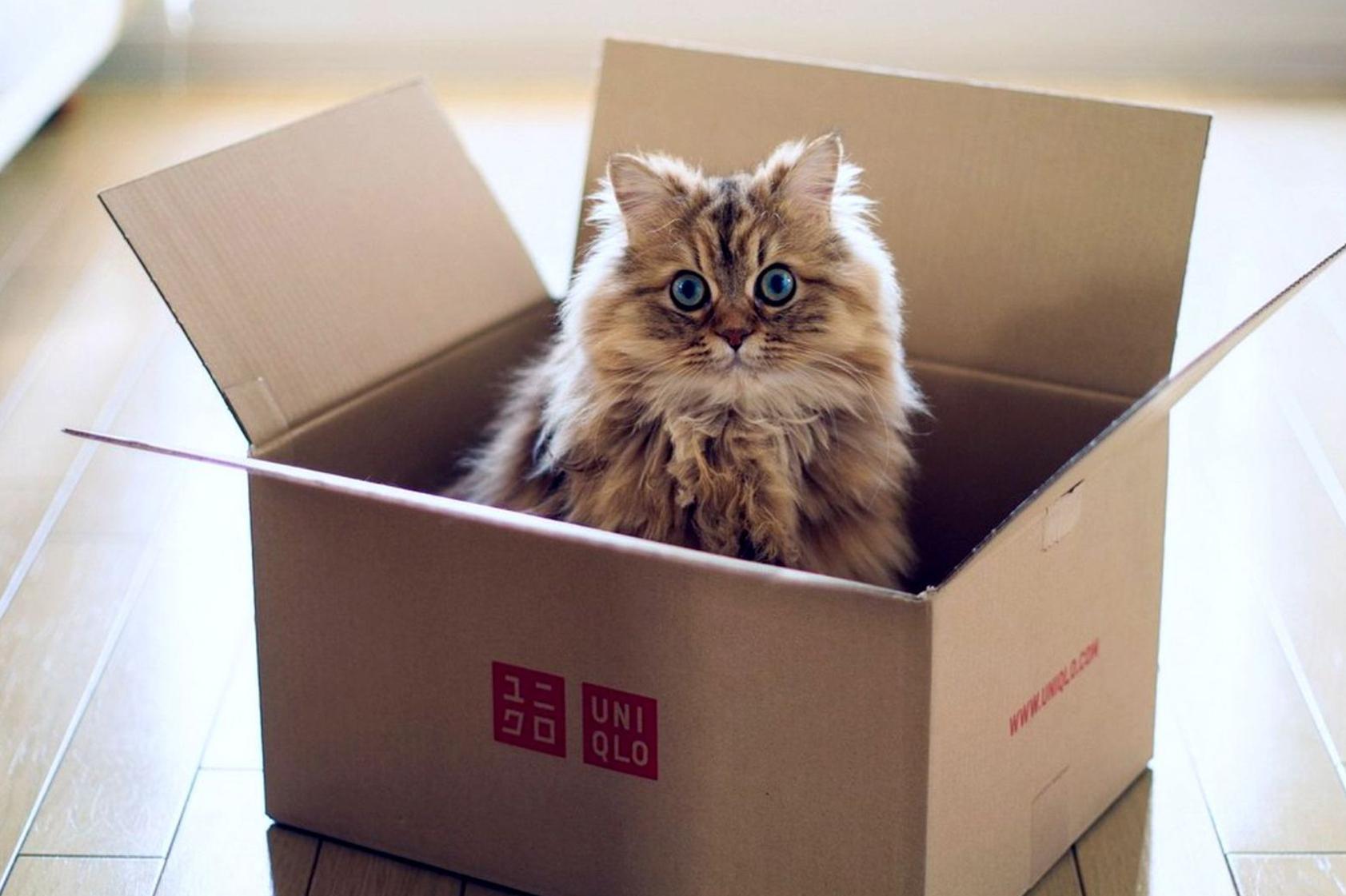 Как осуществляется квартирный переезд?