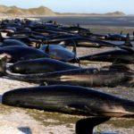 Почему киты склонны к суициду?